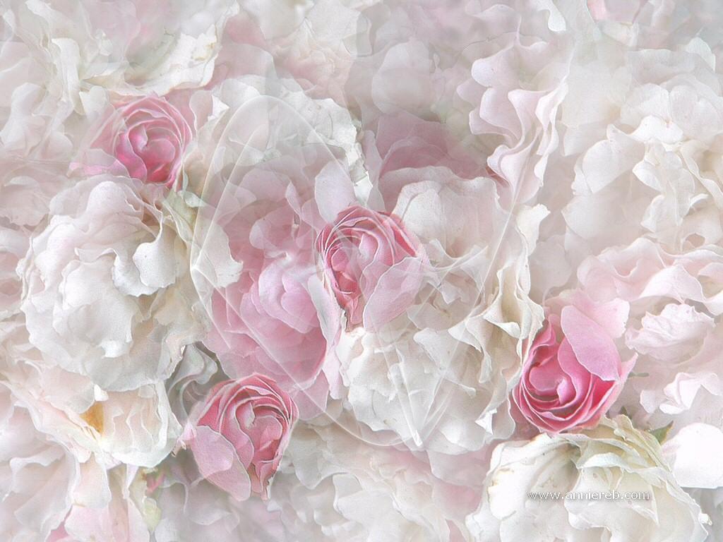 beyaz pembe çiçek