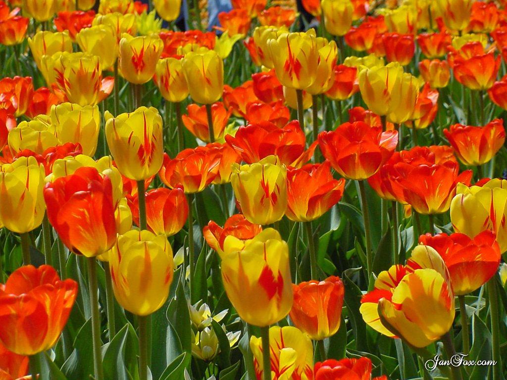 pembe çiçek demeti