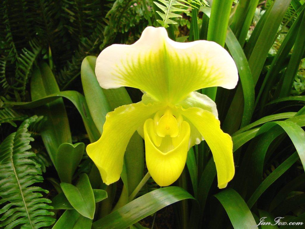 sarı açan çiçek