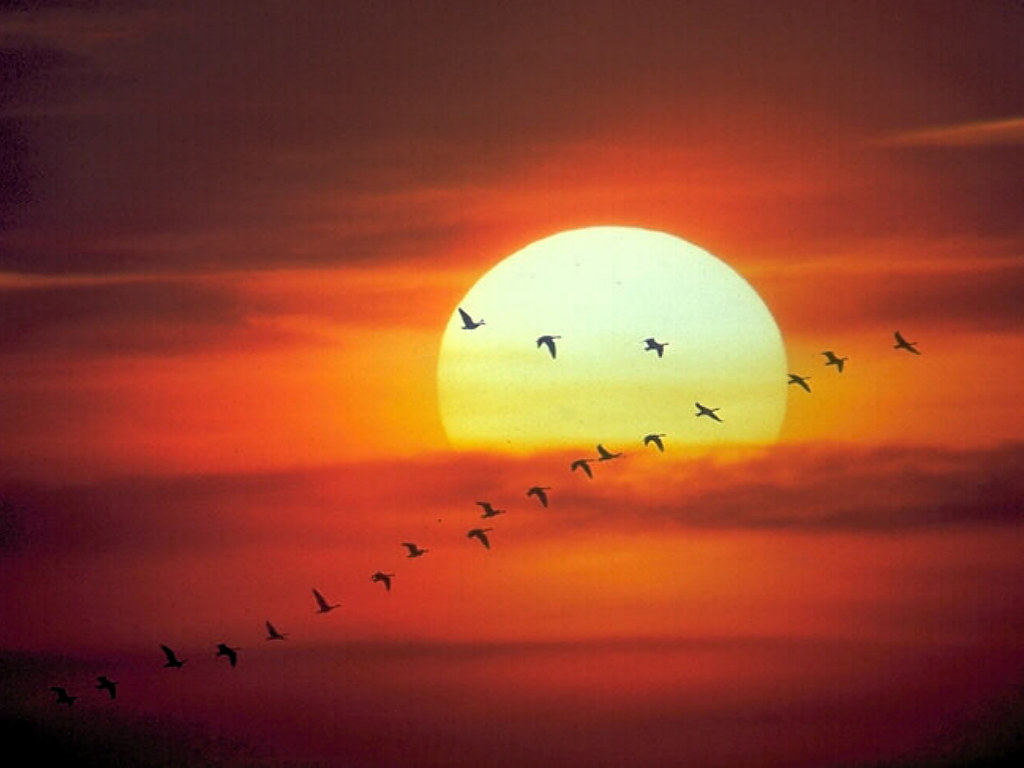 gün batımı ekran koruyucu