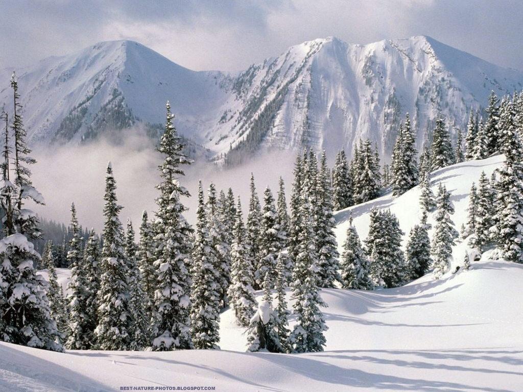 ağaç dağlar