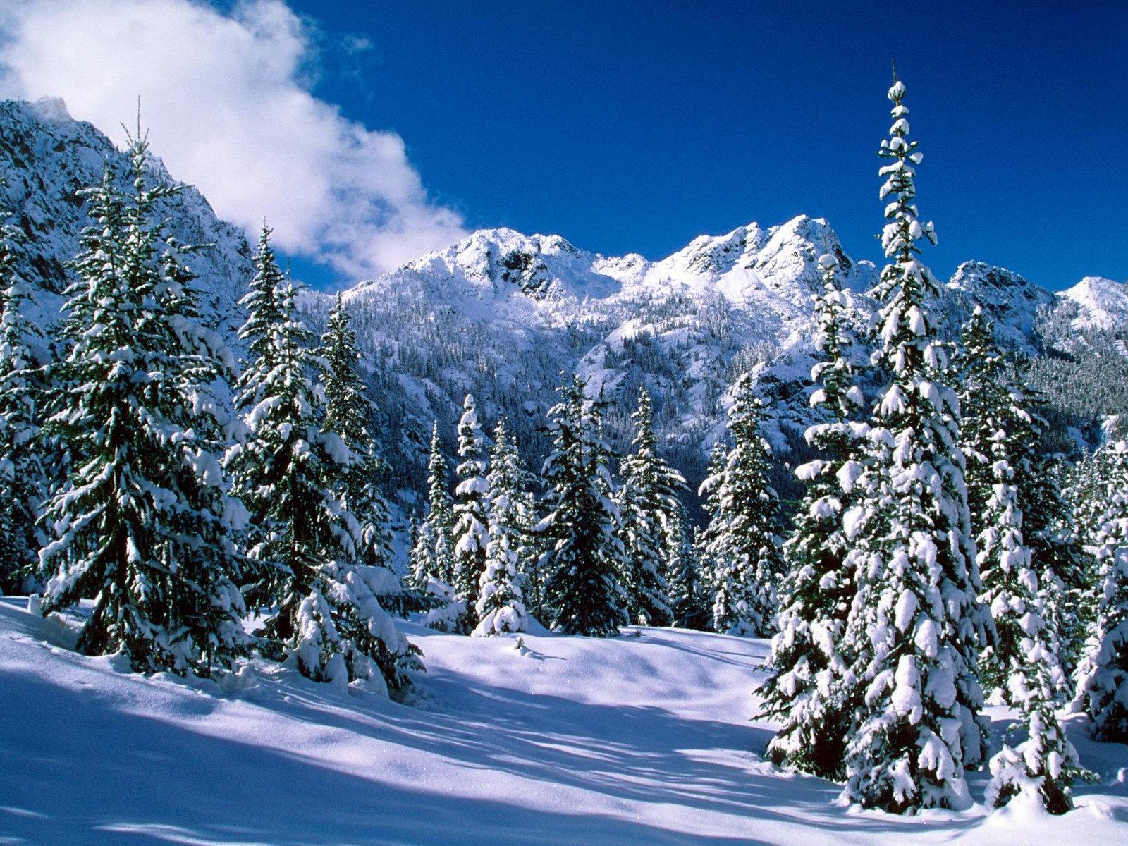kışın karlı ağaçlar