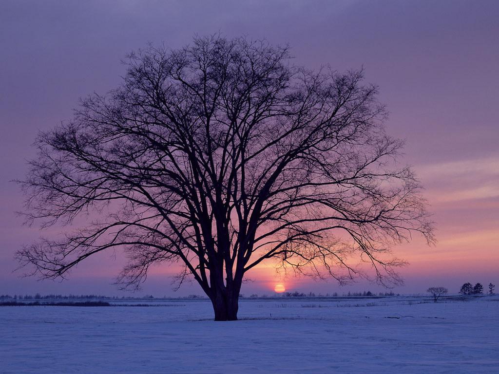 kışın ağaç
