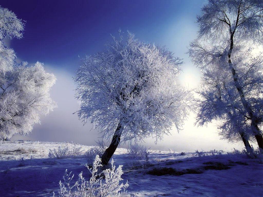 kışın karlı ağaç