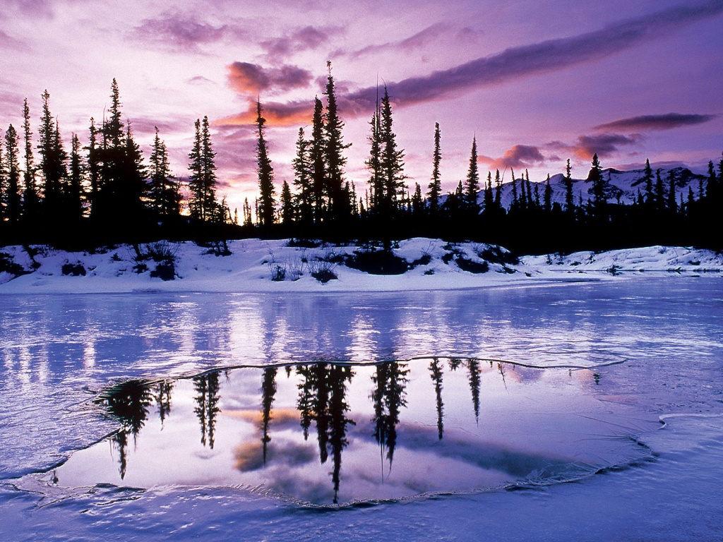 kışın orman