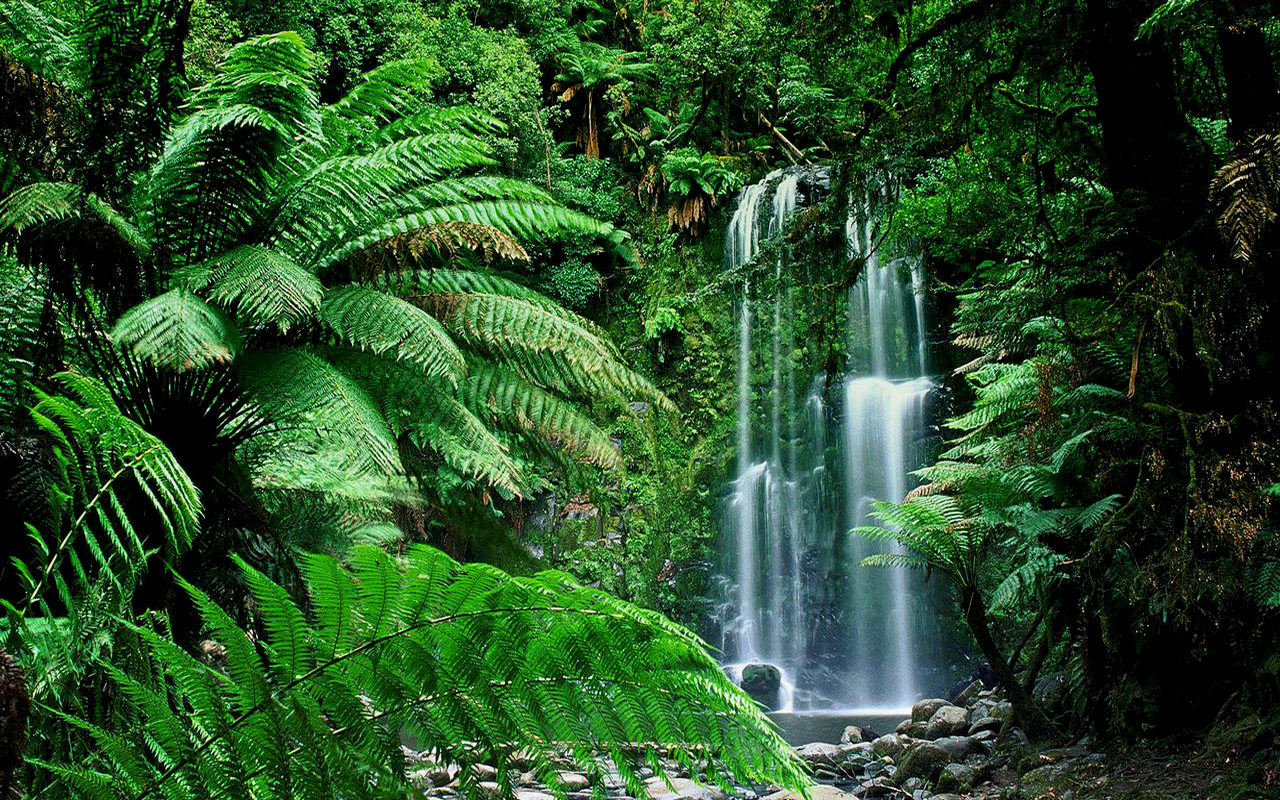 şelale orman