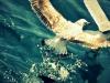 denizde-martilar