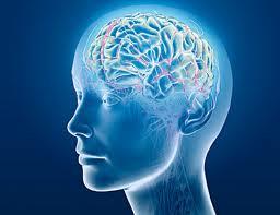 beyin resmi